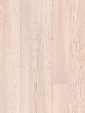 Tango Oak Amaryllis